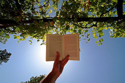 Image result for reading a book in the sun